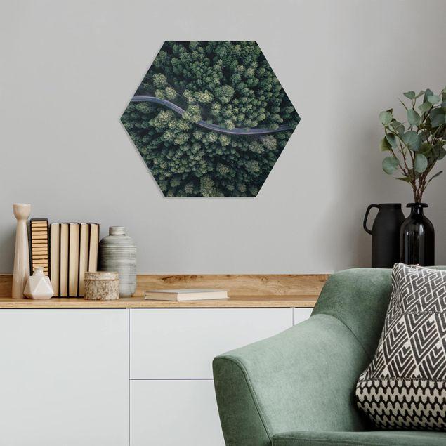 Hexagon Bild Forex - Luftbild - Waldstraße von Oben
