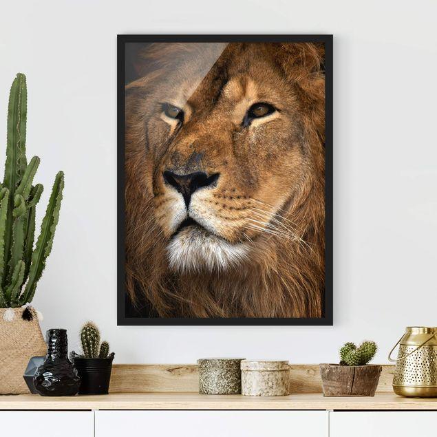 Bild mit Rahmen - Löwenblick - Hochformat 3:4