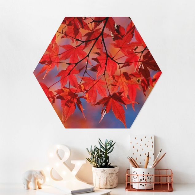 Hexagon Bild Forex - Red Maple