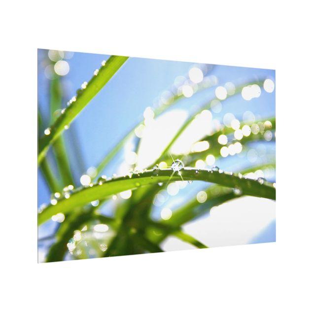 Glas Spritzschutz - Kiss of Sun - Querformat - 4:3