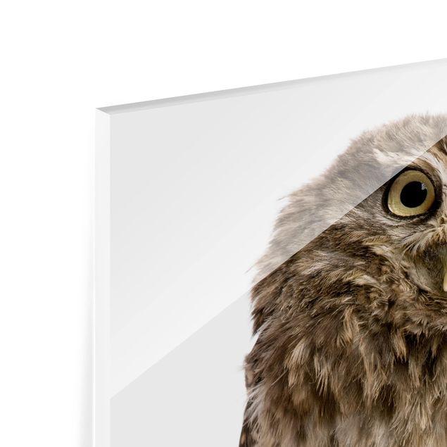 Glas Spritzschutz - Neugierige Eule - Quadrat - 1:1