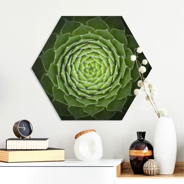 Hexagon Bild Forex - Mandala Sukkulente
