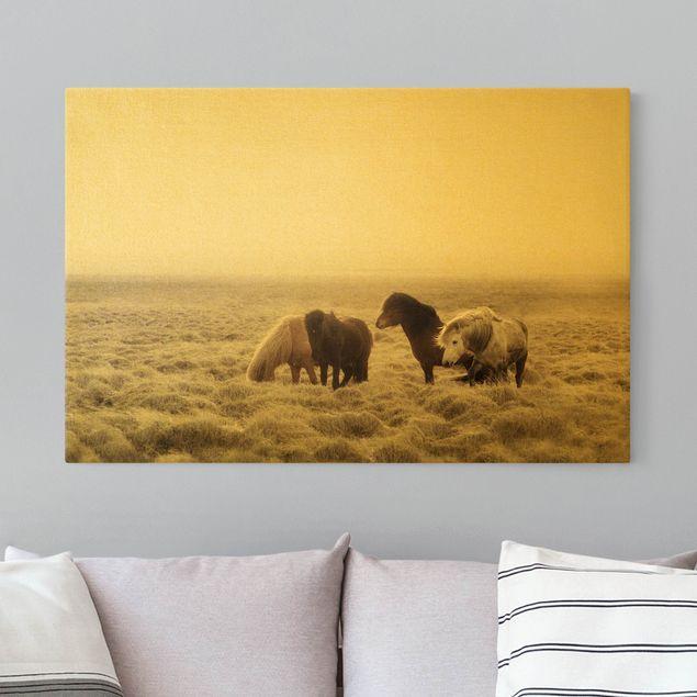 Leinwandbild Gold - Island Wildpferde - Querformat 3:2