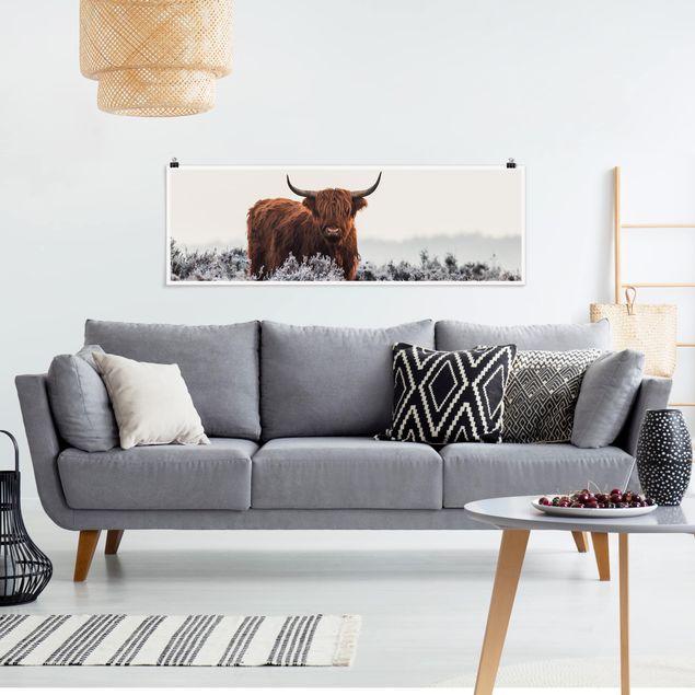 Poster - Bison in den Highlands - Panorama Querformat