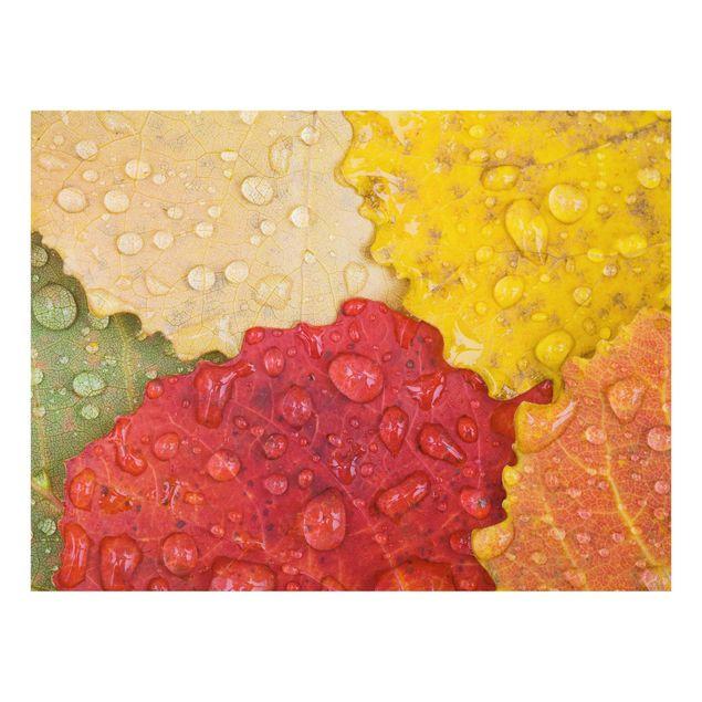 Glas Spritzschutz - Wassertropfen auf bunten Blättern - Querformat - 4:3