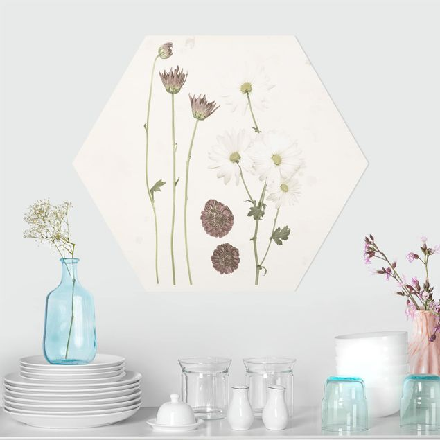 Hexagon Bild Forex - Herbarium in rosa IV