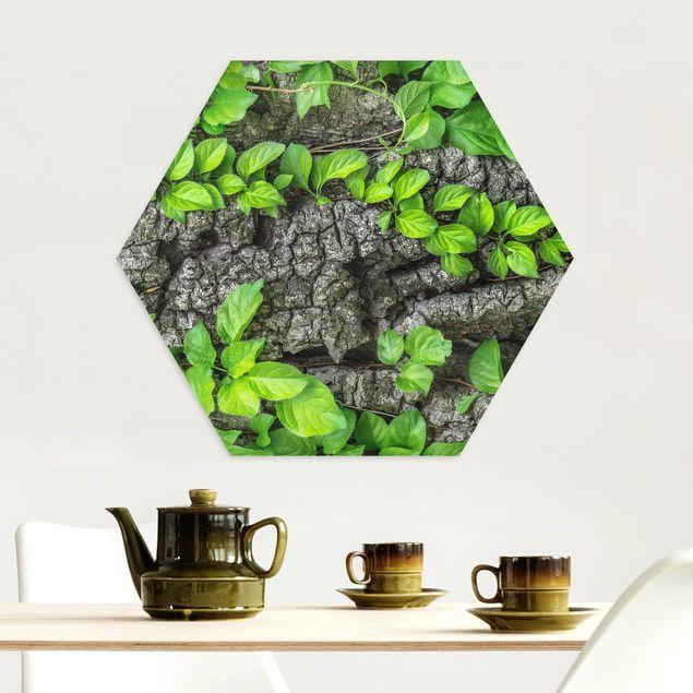 Hexagon Bild Alu-Dibond - Efeuranken Baumrinde