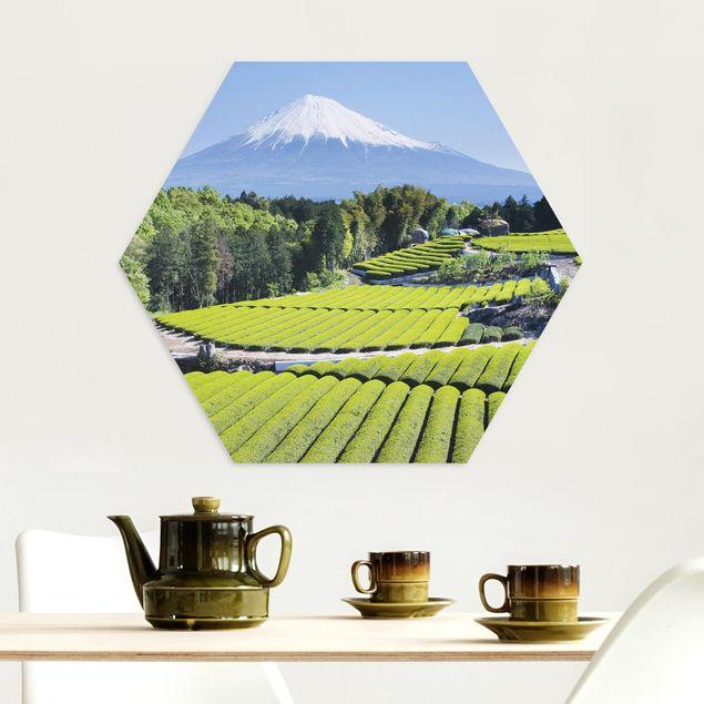Hexagon Bild Alu-Dibond - Teefelder vor dem Fuji