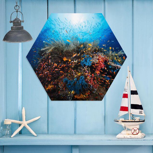 Hexagon Bild Forex - Lagune Unterwasser