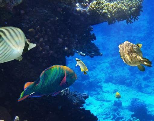 Fensterfolie - XXL Fensterbild Underwater Dreams - Fenster Sichtschutz