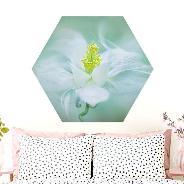 Hexagon Bild Alu-Dibond - Weiße Akelei