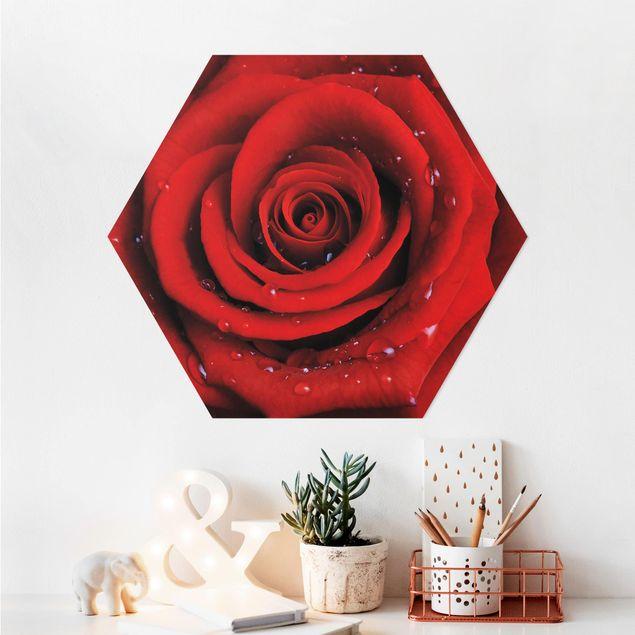 Hexagon Bild Alu-Dibond - Rote Rose mit Wassertropfen