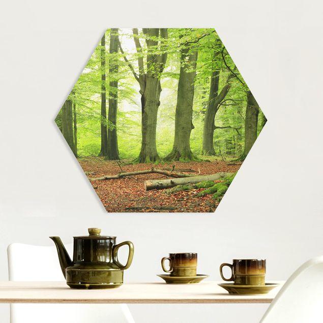 Hexagon Bild Forex - Mighty Beech Trees
