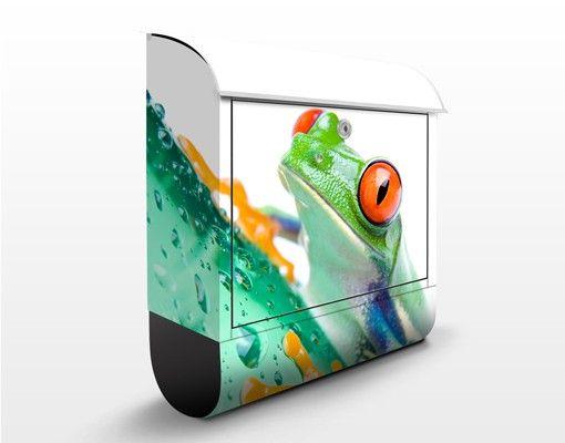 Briefkasten mit Zeitungsfach - Frog - Briefkasten mit Tiermotiv