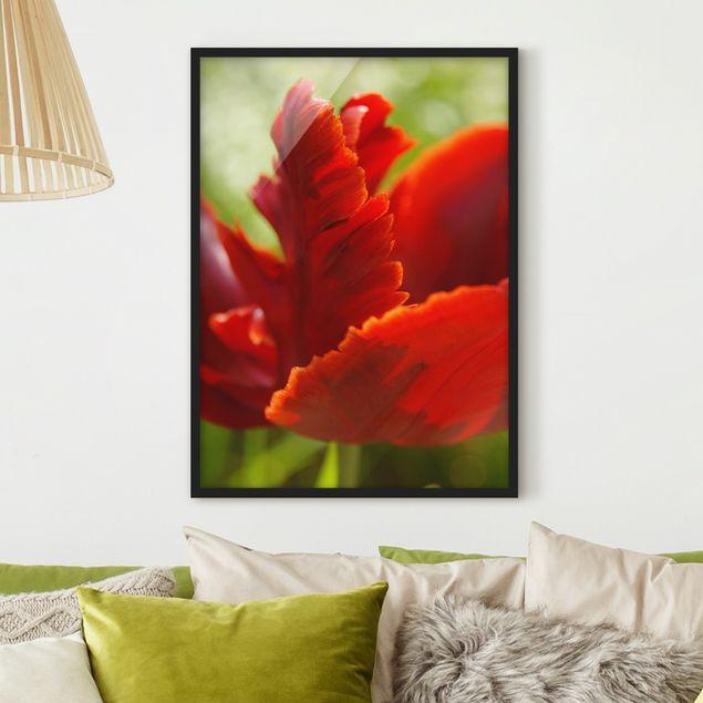Bild mit Rahmen - Red Tulip - Hochformat 3:4