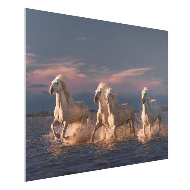 Forex Fine Art Print - Wilde Pferde in Kamargue - Querformat 3:4
