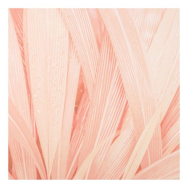 Glas Spritzschutz - Palmenblätter Rosa - Quadrat - 1:1