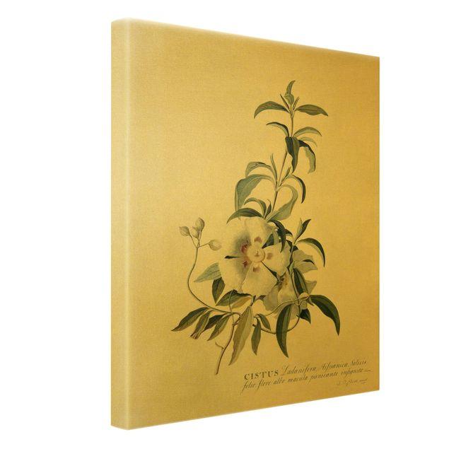 Leinwandbild Gold - Georg Dionysius Ehret - Zistrose - Hochformat 3:4