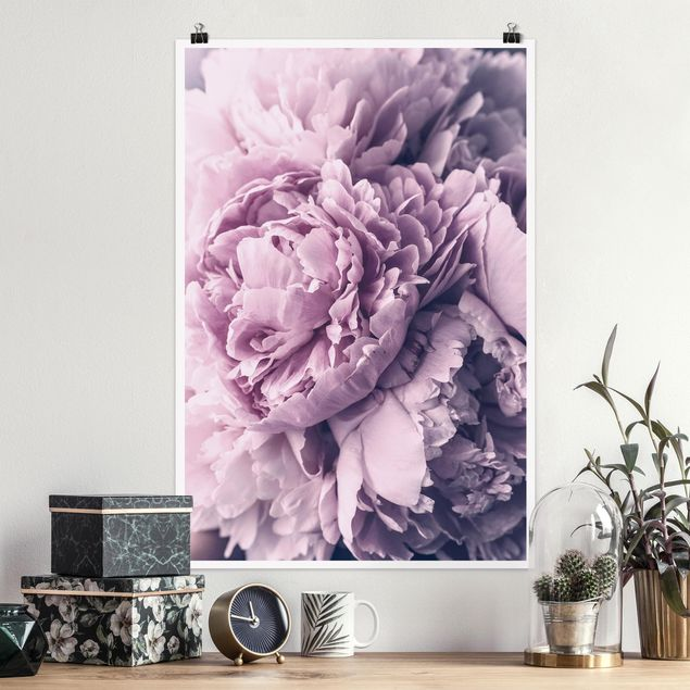Poster - Lila Pfingstrosenblüten - Hochformat 3:2