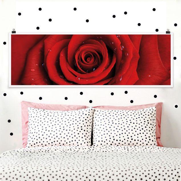 Poster - Rote Rose mit Wassertropfen - Panorama Querformat