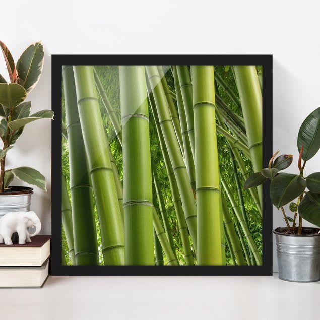 Bild mit Rahmen - Bamboo Trees - Quadrat 1:1