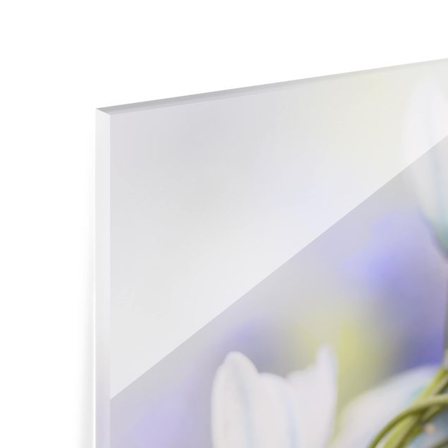 Glas Spritzschutz - Schmetterling und Marienkäfer auf Blüten - Quadrat - 1:1