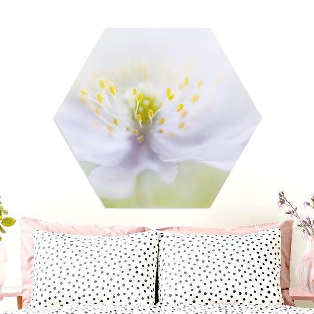 Hexagon Bild Forex - Anemonen Schönheit