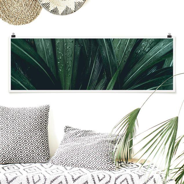 Poster - Grüne Palmenblätter - Panorama Querformat