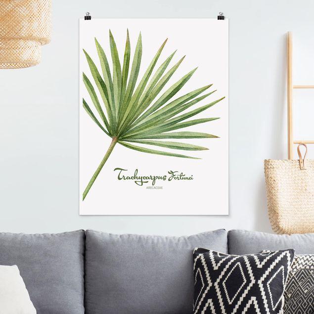 Poster - Aquarell Botanik Trachycarpus fortunei - Hochformat 3:4
