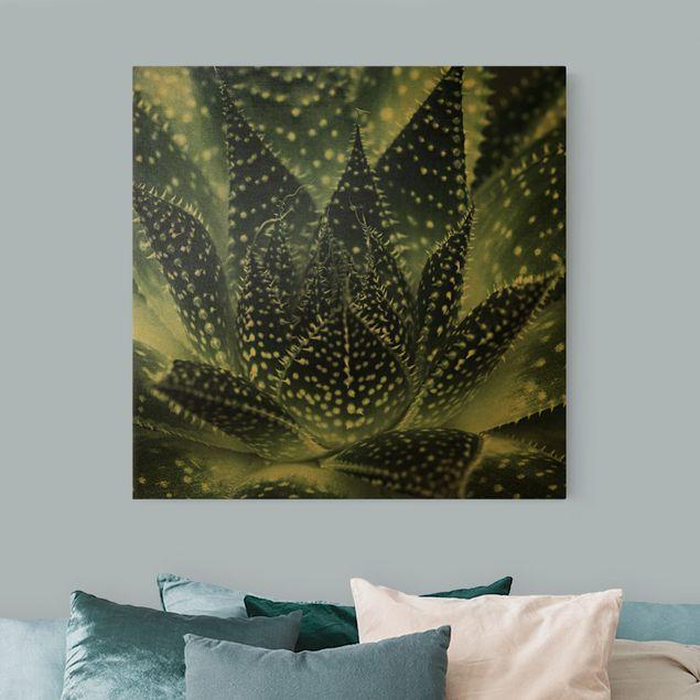 Leinwandbild Gold - Kaktus mit Sternpunkten bei Nacht - Quadrat 1:1