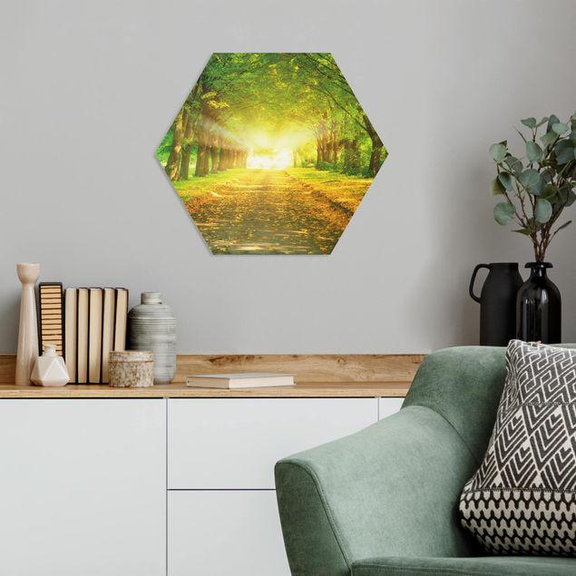 Hexagon Bild Forex - Autumn Avenue