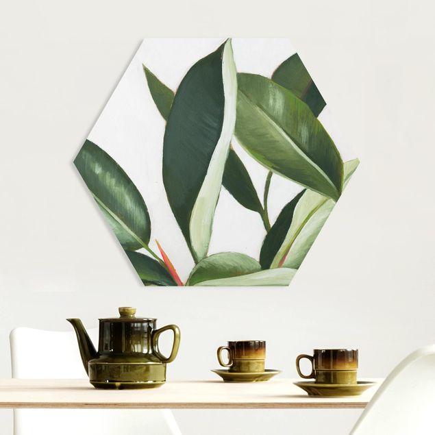 Hexagon Bild Forex - Lieblingspflanzen - Gummibaum