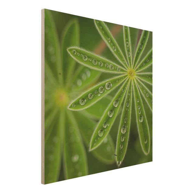 Holzbild - Morgentau auf Lupinenblättern - Quadrat 1:1