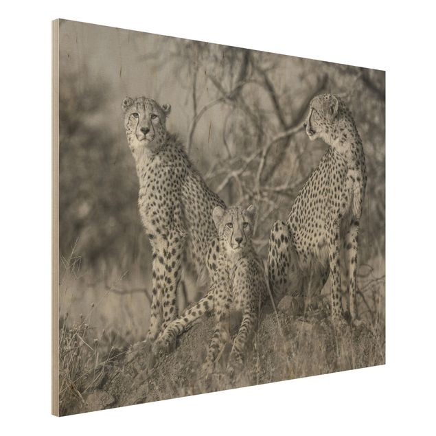 Holzbild - Drei Geparden - Querformat 3:4