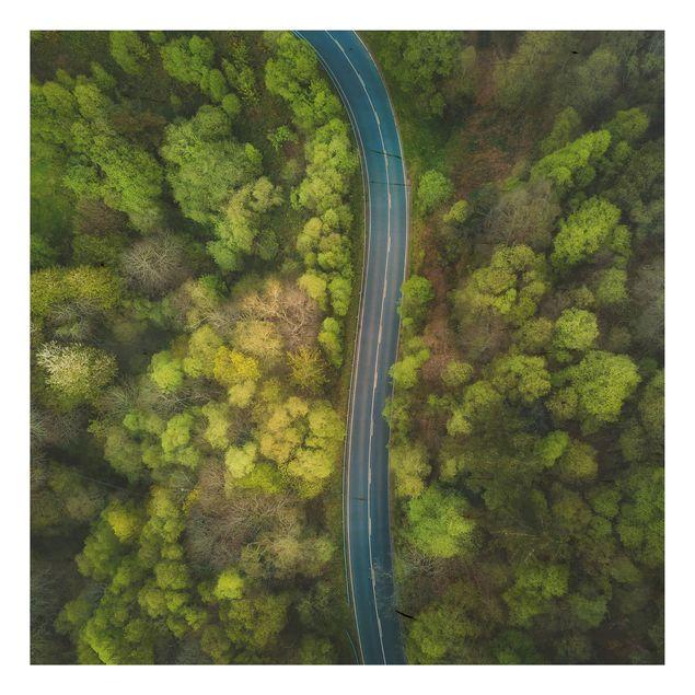 Holzbild - Luftbild - Asphaltstraße im Wald - Quadrat 1:1