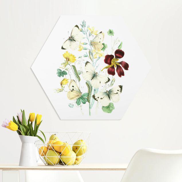 Hexagon Bild Forex - Britische Schmetterlinge II