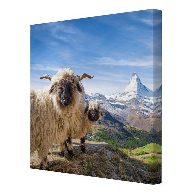 Leinwandbild - Schwarznasenschafe von Zermatt - Quadrat 1:1