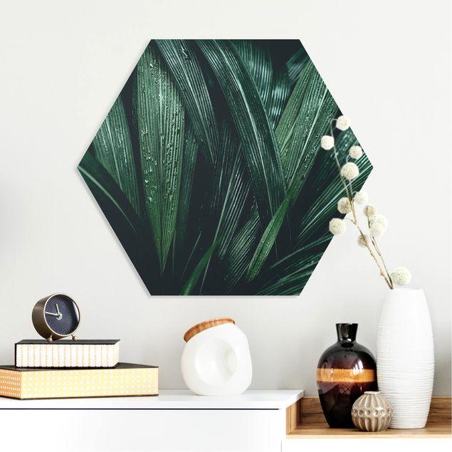 Hexagon Bild Forex - Grüne Palmenblätter