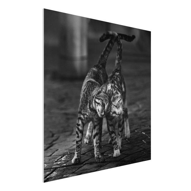 Forex Fine Art Print - Kätzchenfreundschaft - Quadrat 1:1