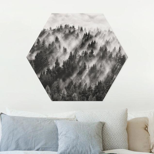 Hexagon Bild Forex - Lichtstrahlen im Nadelwald