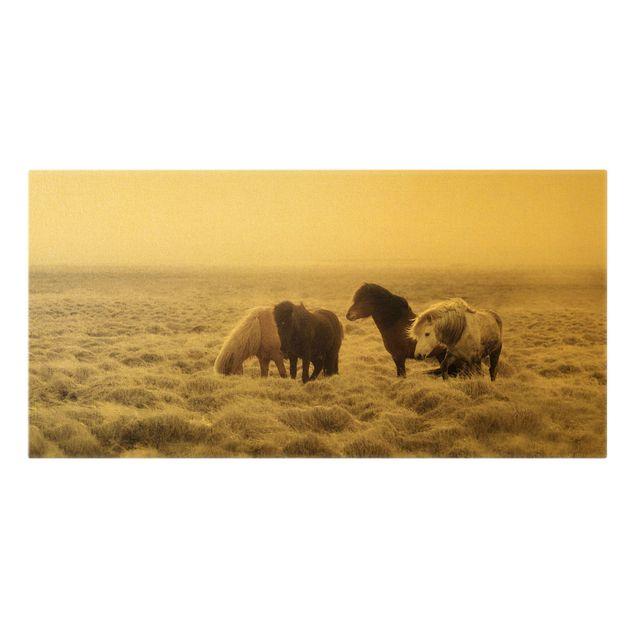 Leinwandbild Gold - Island Wildpferde - Querformat 2:1