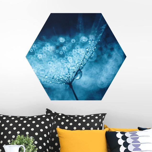 Hexagon Bild Alu-Dibond - Blaue Pusteblume im Regen