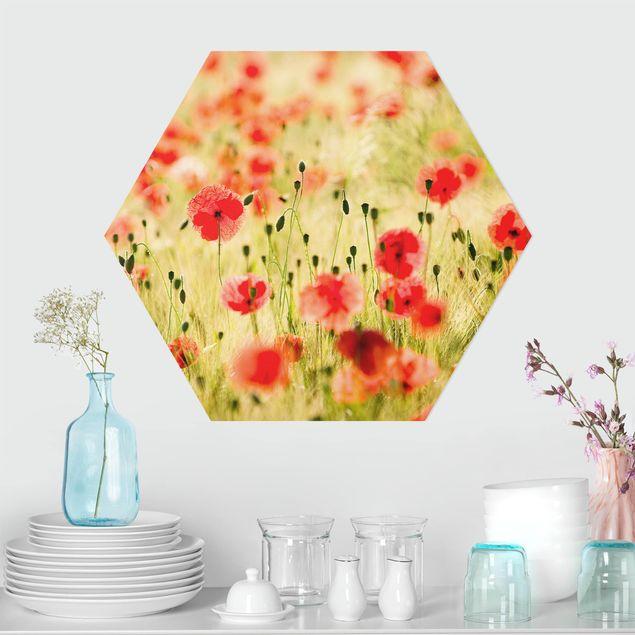Hexagon Bild Alu-Dibond - Summer Poppies