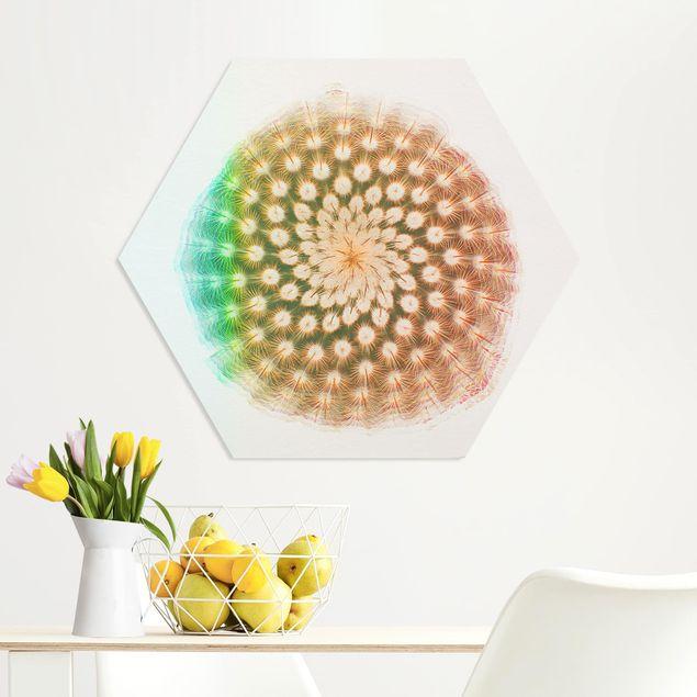 Hexagon Bild Forex - Wasserfarben - Kaktusblüte