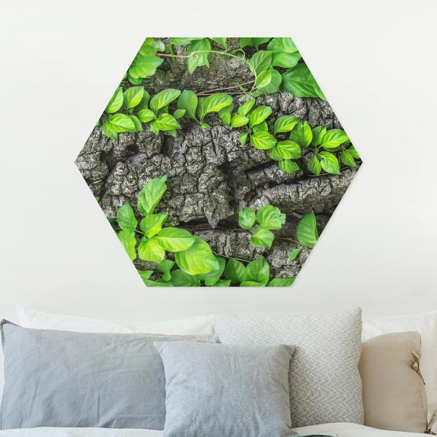 Hexagon Bild Forex - Efeuranken Baumrinde