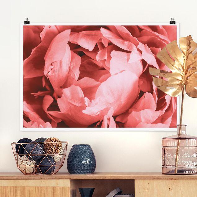 Poster - Pfingstrose Blüte Koralle - Querformat 2:3