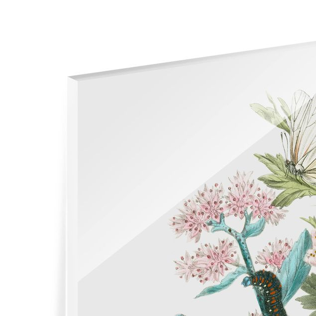 Glas Spritzschutz - Britische Schmetterlinge I - Quadrat - 1:1