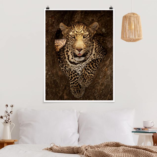 Poster - Leopard ruht auf einem Baum - Hochformat 3:4