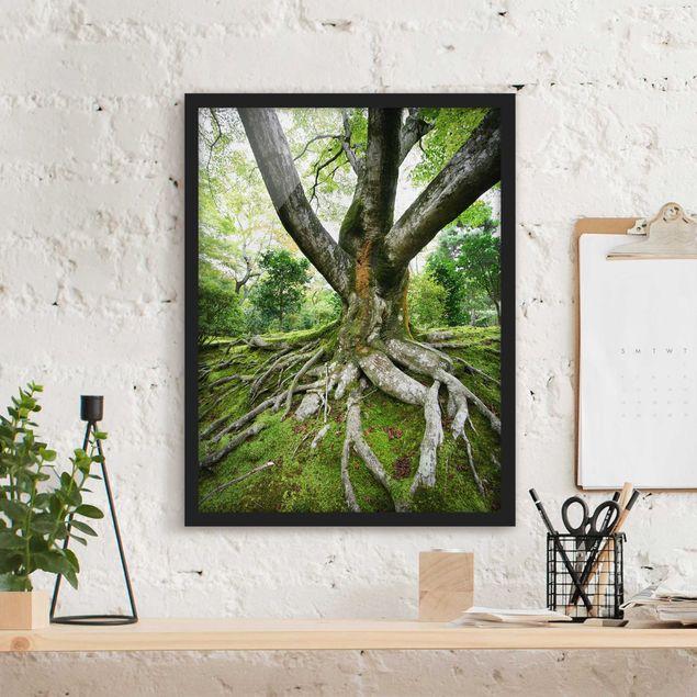 Bild mit Rahmen - Alter Baum - Hochformat 3:4