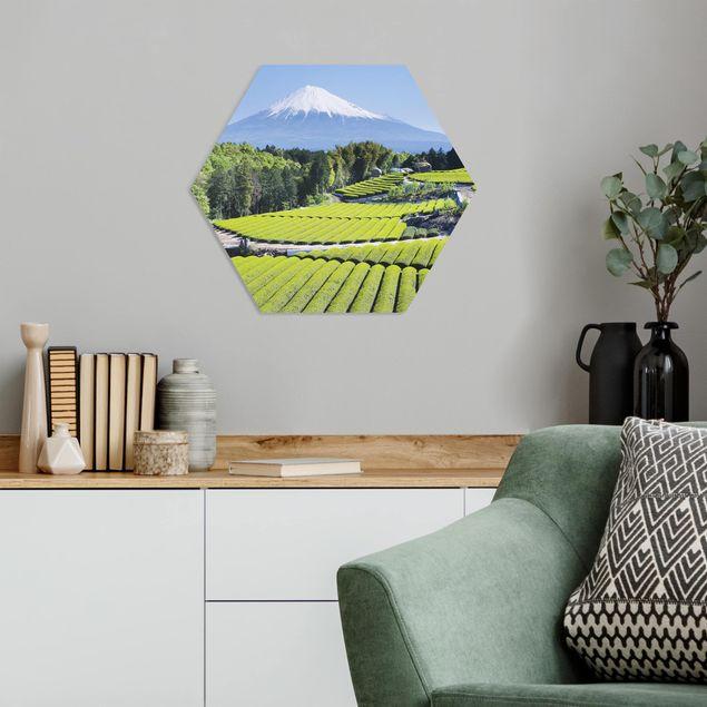 Hexagon Bild Forex - Teefelder vor dem Fuji